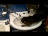 кошка ловит воду