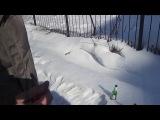 Глупая кошка пересекает забор!